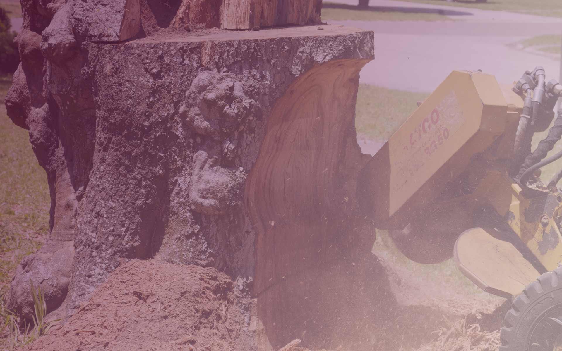 Stump Removal | Treewise Men